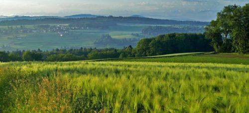 landscape-4131552_960_720